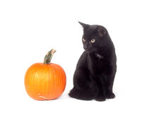 Black cat and pumpkin Stock Image