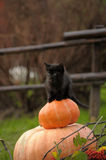 Black cat with a pumpkin Stock Image