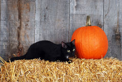 Black cat with a pumpkin. On a straw bale royalty free stock photography