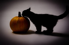 Black cat and pumpkin. Black Halloween Cat near the Pumpkin Royalty Free Stock Image