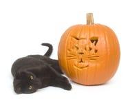 Black cat and pumpkin Stock Photos