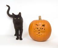 Black cat and pumpkin Royalty Free Stock Image