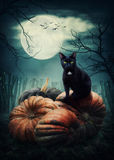 Black cat. On a pumpkin stock image