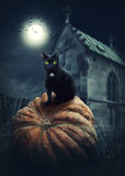 Black cat. On a pumpkin Stock Images