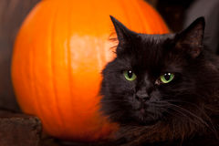 Black Cat by a Pumpkin. Close up of a black cat with green and gold eyes in front of a orange pumpkin royalty free stock images