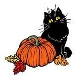 Black cat and   pumpkin Stock Photography