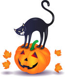 Black cat with pumpkin, Halloween illustration Royalty Free Stock Photography