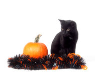 Black cat with pumpkin and tinsel Stock Images
