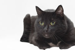 A black cat ready to spring Stock Photos
