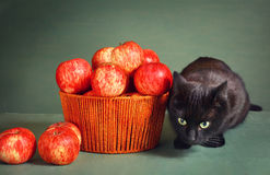 Black cat and red apples on blue background Stock Photo