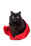 Black cat in red bag. Isolated Stock Photo