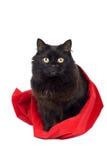 Black cat in red bag Stock Photo