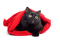 Black cat in red bag isolated Royalty Free Stock Image