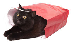 Black cat in red bag isolated. On white royalty free stock photo