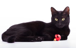 Black cat with a red bauble Stock Images