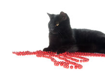 Black cat and red beads Stock Photo