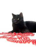 Black cat and red beads Royalty Free Stock Photos