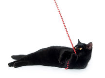 Black cat and red beads Royalty Free Stock Images
