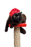 Black cat in a red cap isolated. Funny black cat in a red cap looking into camera isolated on white Royalty Free Stock Photo