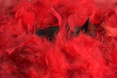 Black cat in red feathers Royalty Free Stock Photos