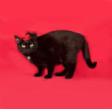 Black cat in red hat is on red Royalty Free Stock Photography