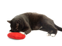 Black cat and red heart Stock Photography