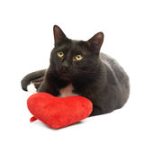 Black cat and red heart Royalty Free Stock Images