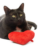 Black cat and red heart Royalty Free Stock Image