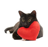 Black cat and red heart. Black cat lying and using the toy red plush heart as a pillow, composition isolated over the white background stock image