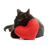 Black cat and red heart Royalty Free Stock Photos