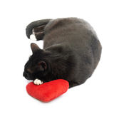 Black cat and red heart Stock Photo