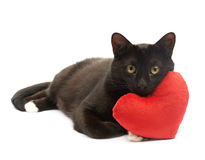 Black cat and red heart Stock Photos