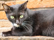 The black cat is relaxing on the old brick wall.  Stock Photo