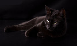 Black cat resting against dark background Stock Photo