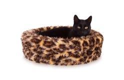 Black cat resting stock photography