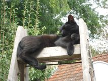Black cat resting on the ladder. My black cat male resting on the ladder, enjoying the sun with green three and roof in background - he loved to be in unusuall Royalty Free Stock Photography