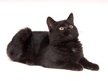 Black cat resting and looking up stock image