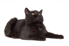 Black cat resting and looking up Stock Images