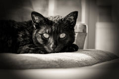 A black cat rests on a chair in the afternoon sun Stock Image