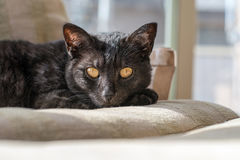 A black cat rests on a chair in the afternoon sun Stock Images