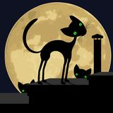 Black cat on the roof. Stock Images