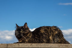 Black cat on a roof sky and clouds Royalty Free Stock Photography