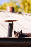 Black cat on roof Royalty Free Stock Image