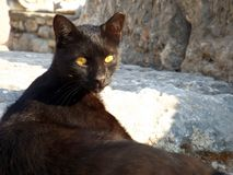 Black cat in ruins Ephesus in Turkey. Cat in the ruins of the ancient city of Ephesus in Turkey Stock Image