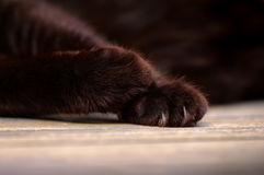 Black Cat's Paws Stock Photo