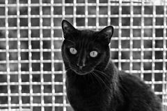 Black cat in safe and secure outdoor enclosure. Cage monochrome stock image