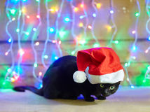 Black cat in Santa Claus red hat. On bright bokeh background Royalty Free Stock Images