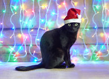 Black cat in Santa Claus xmas red hat Royalty Free Stock Photography