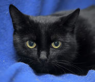 Black cat with a scared lookound Stock Photo