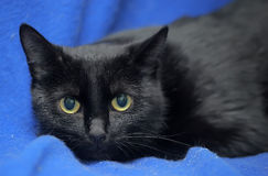 Black cat with a scared lookound Stock Photography
